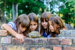 Kids playing with a turtle. Four little girls are playing with the turtle royalty free stock photography