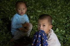 Kids playing in the village in the tea leaves. Burma Stock Photos