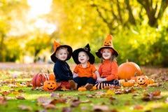 Kids with pumpkins in Halloween costumes Stock Image