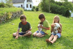 Kids with puppies. Kids - two little boys and barefoot girl playing with dogs - puppies stock photography