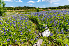 Kids Purse and Shoes in Field of Texas Bluebonnet Wildflowers on Stock Image