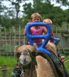 Kids riding on the camel Royalty Free Stock Images