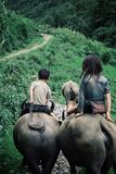 Kids riding water buffaloes in the mountains royalty free stock photography