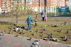 Kids run down the street to a flock of pigeons in a residential area of Krasnoyarsk on a sunny autumn day. Krasnoyarsk, Krasnoyarsk Region / RF stock image