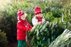 Kids select Christmas tree. Family buying Xmas tree. Family selecting Christmas tree. Kids choosing freshly cut Norway Xmas tree at outdoor lot. Children buying stock photos