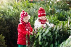 Kids select Christmas tree. Family buying Xmas tree. Family selecting Christmas tree. Kids choosing freshly cut Norway Xmas tree at outdoor lot. Children buying royalty free stock images