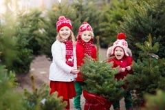 Kids selecting Christmas tree. Xmas gifts shopping. Family selecting Christmas tree. Kids choosing freshly cut Norway Xmas tree at outdoor lot. Children buying royalty free stock photos