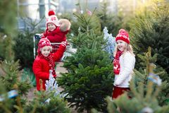 Kids selecting Christmas tree. Xmas gifts shopping. Family selecting Christmas tree. Kids choosing freshly cut Norway Xmas tree at outdoor lot. Children buying Stock Photos
