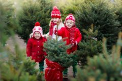 Kids selecting Christmas tree. Xmas gifts shopping. Family selecting Christmas tree. Kids choosing freshly cut Norway Xmas tree at outdoor lot. Children buying royalty free stock photography