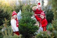 Kids selecting Christmas tree. Xmas gifts shopping. Family selecting Christmas tree. Kids choosing freshly cut Norway Xmas tree at outdoor lot. Children buying royalty free stock photo