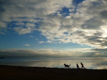 Kids and shepherd play. German shepherd and children playing on lake Rotorua at sunset Stock Photos