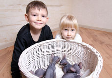 Kids Smiling at Camera Behind Sphynx Kittens Stock Photo