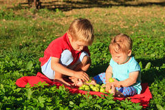 Kids sorting apples in summer park. Brother and sister sorting apples in summer park Stock Image