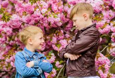 Kids spring pink flowers of sakura tree background. Botany concept. Brothers enjoying cherry blossom. Brotherhood. Concept. Happy spring holidays.Children enjoy stock image