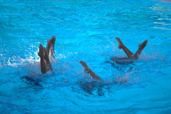 Kids synchronized swimming team. Group of little girls in a pool synchronized swimming team performing Stock Photo