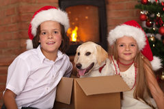 Kids with their new pet at Christmas time Royalty Free Stock Image