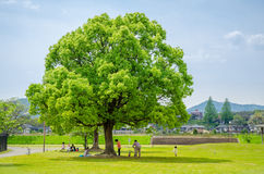 Kids with their parents playing under big tree Stock Photo