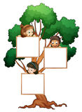Kids on the tree with white board Stock Photography