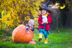 Kids trick or treating at Halloween. Little girl in witch costume and baby boy in huge pumpkin playing in autumn park. Kids at Halloween trick or treat. Toddler Stock Photo