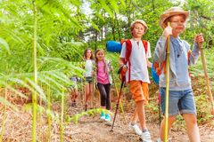 Kids walk with hiking poles among fern. Group of school age kids walk among fern in the forest during hiking summer camping activity royalty free stock image
