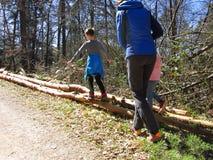 Kids walking on tree trunks royalty free stock photography