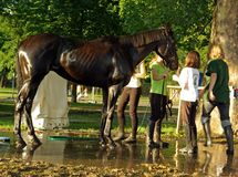 Kids washing race horse Royalty Free Stock Photos