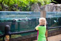 Kids watch penguin at zoo. Child at safari park. Kids watch penguins in zoo. Child watching penguin birds swimming underwater at outdoor aquarium in tropical stock images