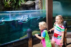 Kids watch penguin at zoo. Child at safari park. Kids watch penguins in zoo. Child watching penguin birds swimming underwater at outdoor aquarium in tropical royalty free stock photo
