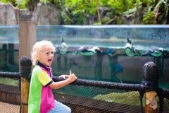 Kids watch penguin at zoo. Child at safari park. Kids watch penguins in zoo. Child watching penguin birds swimming underwater at outdoor aquarium in tropical stock image