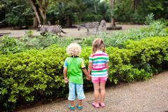 Kids watch zebra at zoo. Children at safari park. Family watching zebra in zoo. Boy and girl in tropical safari park during summer vacation in Singapore. Kids royalty free stock photography