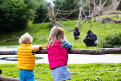 Kids watching animals at the zoo. Two little kids, boy and girl, watch monkey show in the zoo on a cold autumn day. Children watching animals in safari park stock photos