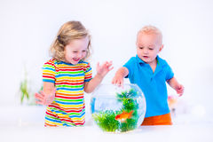 Kids watching fish bowl Stock Image