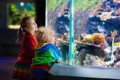 Kids watching fish in tropical aquarium stock images