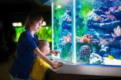 Kids watching fishes in aquarium Royalty Free Stock Photography