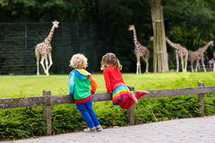 Kids watching giraffe at the zoo. Two children, little toddler boy and preschool girl, brother and sister, watching giraffe animals at the zoo on sunny summer Stock Photos