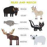 Kids words learning game worksheet read and match. Funny animals Bison Goat Skunk Narwhal Bear Moose Educational Game for Preschoo. L Children Picture puzzle Royalty Free Stock Photography