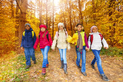 Kids with yellow maple leaves bunch walk in forest Stock Image