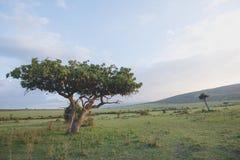 Kiełbasiany drzewo Zdjęcia Stock