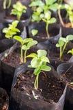 Kiełkować rośliny w pepiniery torbie Fotografia Royalty Free
