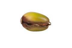 Kiełkujący acorn odizolowywający na białym tle Fotografia Royalty Free