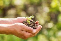 Kiełkuje w rękach na naturalnym zielonym tle pojęcie wzrost i rozwój zdjęcia stock