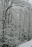 kiełbaski sceniczna zimy. Zdjęcia Royalty Free