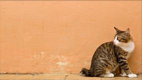 kiedyś zdjęcie czujna kota Obraz Royalty Free