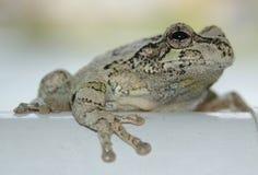 kiedy costa znalazł żab żaby się zakłada się wyższy Nikaragui zazwyczaj innej Panamy roślinność drzewna rica drzew Fotografia Stock
