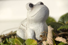 kiedy costa znalazł żab żaby się zakłada się wyższy Nikaragui zazwyczaj innej Panamy roślinność drzewna rica drzew Obrazy Royalty Free