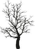kiedy projekt zawiera tekstury sylwetki używa drzew Fotografia Stock