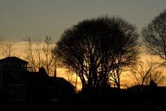kiedy projekt zawiera tekstury sylwetki używa drzew Zdjęcie Royalty Free
