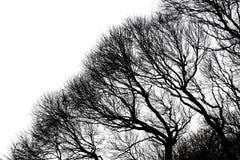 kiedy projekt zawiera tekstury sylwetki używa drzew Zdjęcia Royalty Free