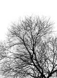 kiedy projekt zawiera tekstury sylwetki używa drzew Zdjęcia Stock