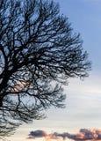 kiedy projekt zawiera tekstury sylwetki używa drzew Fotografia Royalty Free